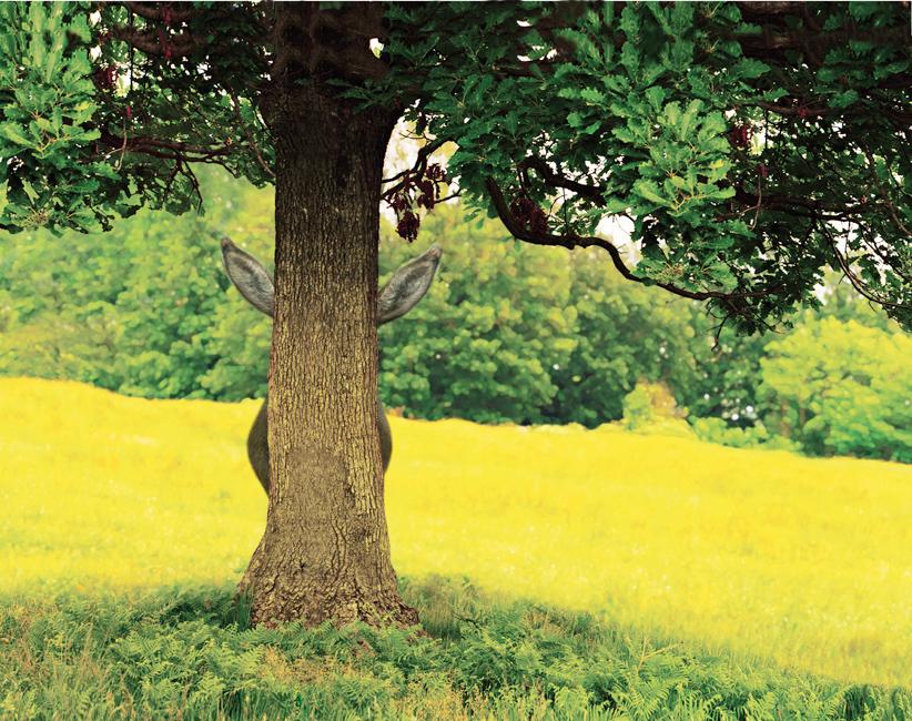 Maurizio Cattelan Untitled 2007