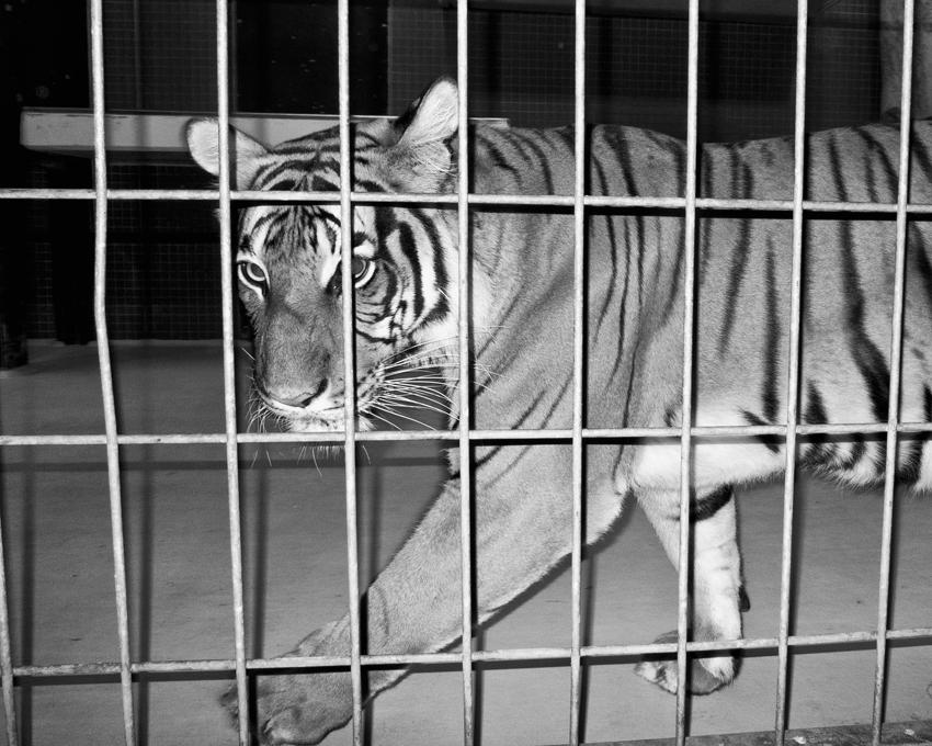 Jacopo Benassi Zoo Berlino