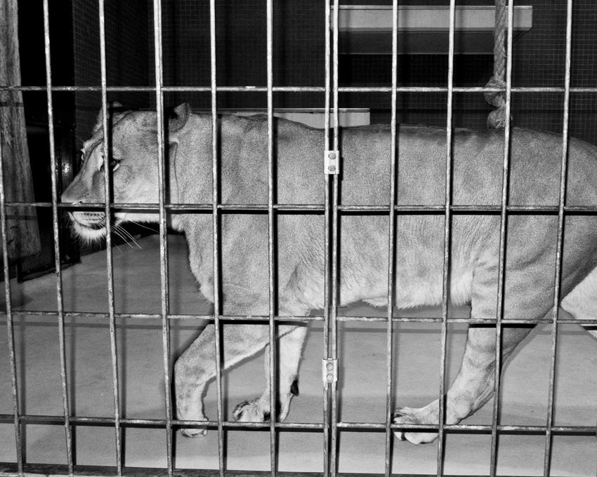 vJacopo Benassi Zoo Berlin