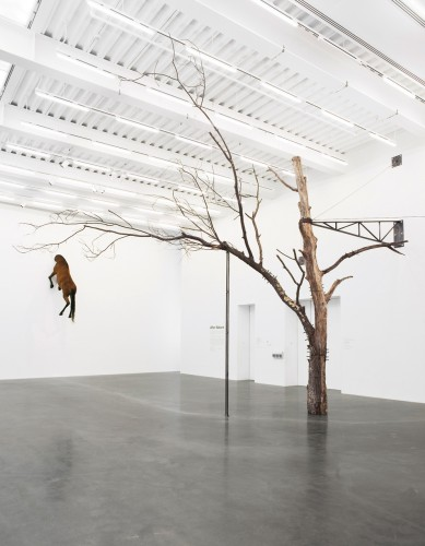 After Nature, 2008. New Museum, New York. Photo: Benoit Pailley
