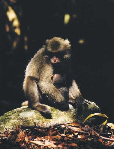 Daniel Gustav Cramer, Untitled (Monkey), 2009. Courtesy: BolteLang Galerie, Zurich, e/and Daniel Gustav Cramer