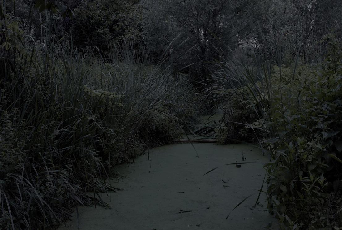 Il giardino di Alessandro Imbriaco