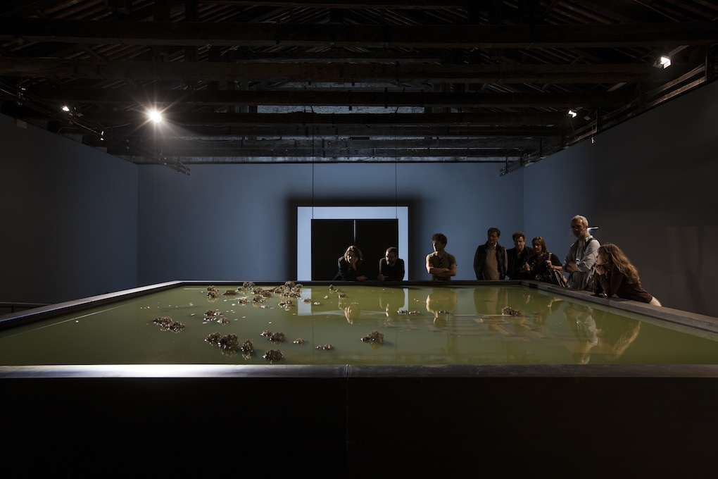 Alfredo Jaar, Venezia, Venezia, 2013. Biennale di Venezia. Padiglione Cile.