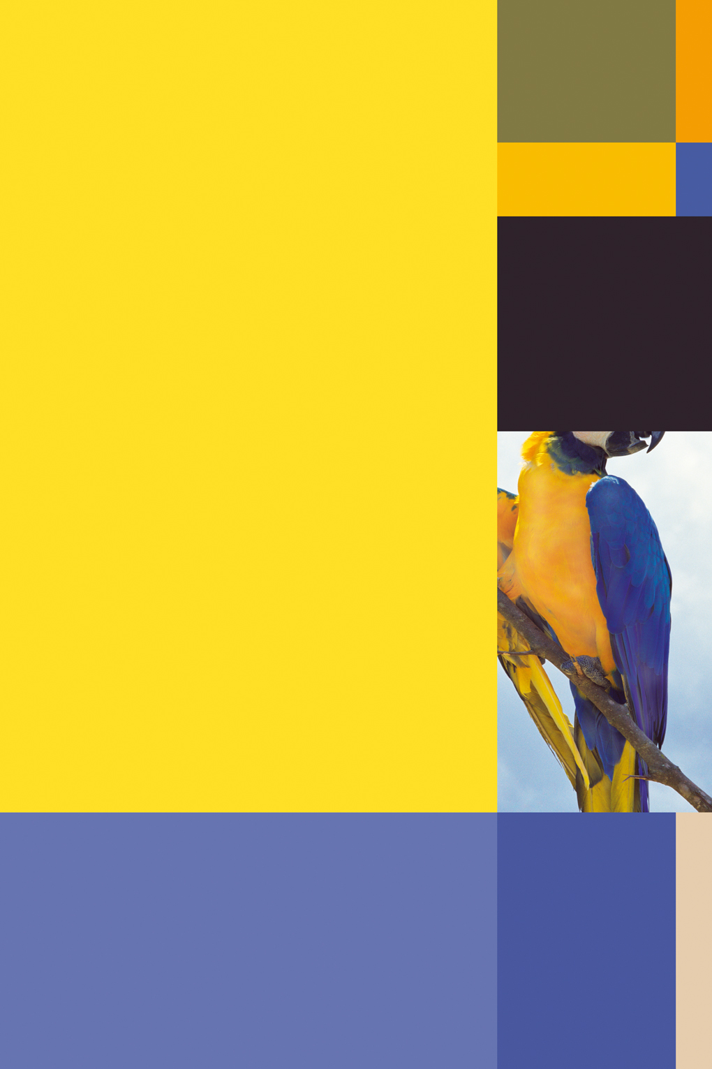 Sergio Vega, Parrot Color Chart #3, 2008 Courtesy: Galerie Karsten Greve, Paris