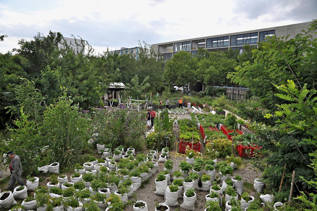 Prinzessinnengärten, l'orto urbano più bello del mondo