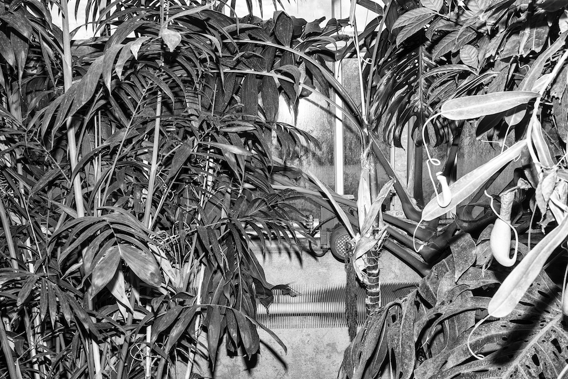 Jardin Botanique de Tour