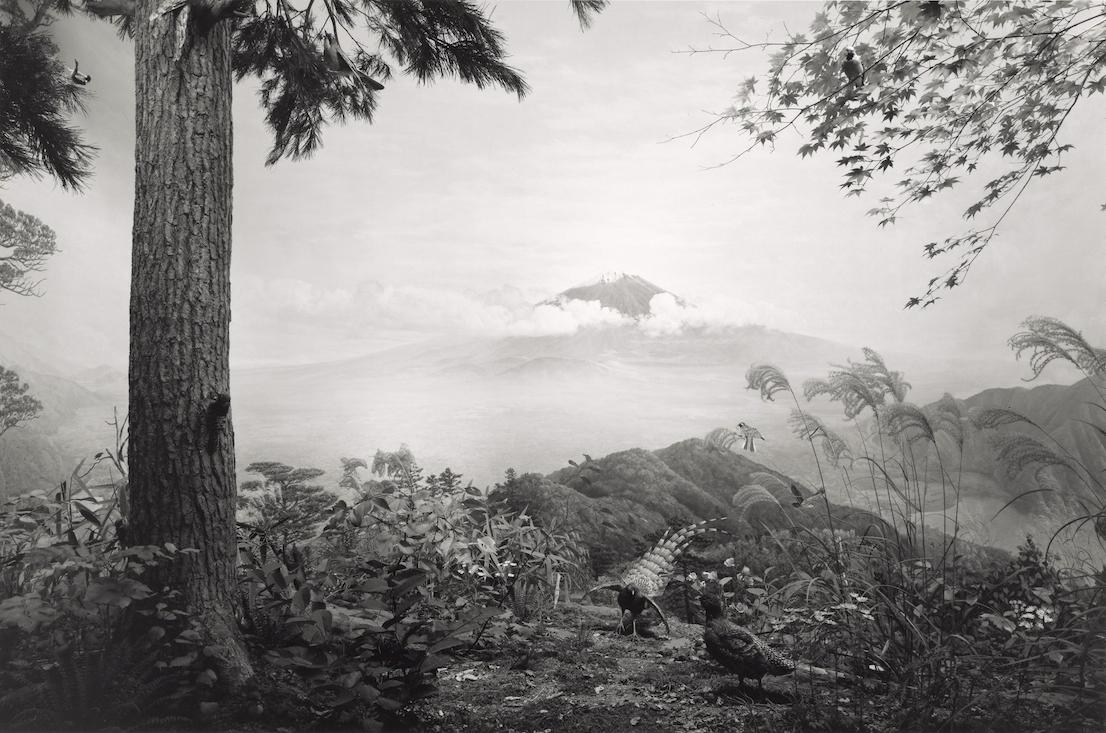 Birds of Japan, Hiroshi Sugimoto, United States, North America, 1994
