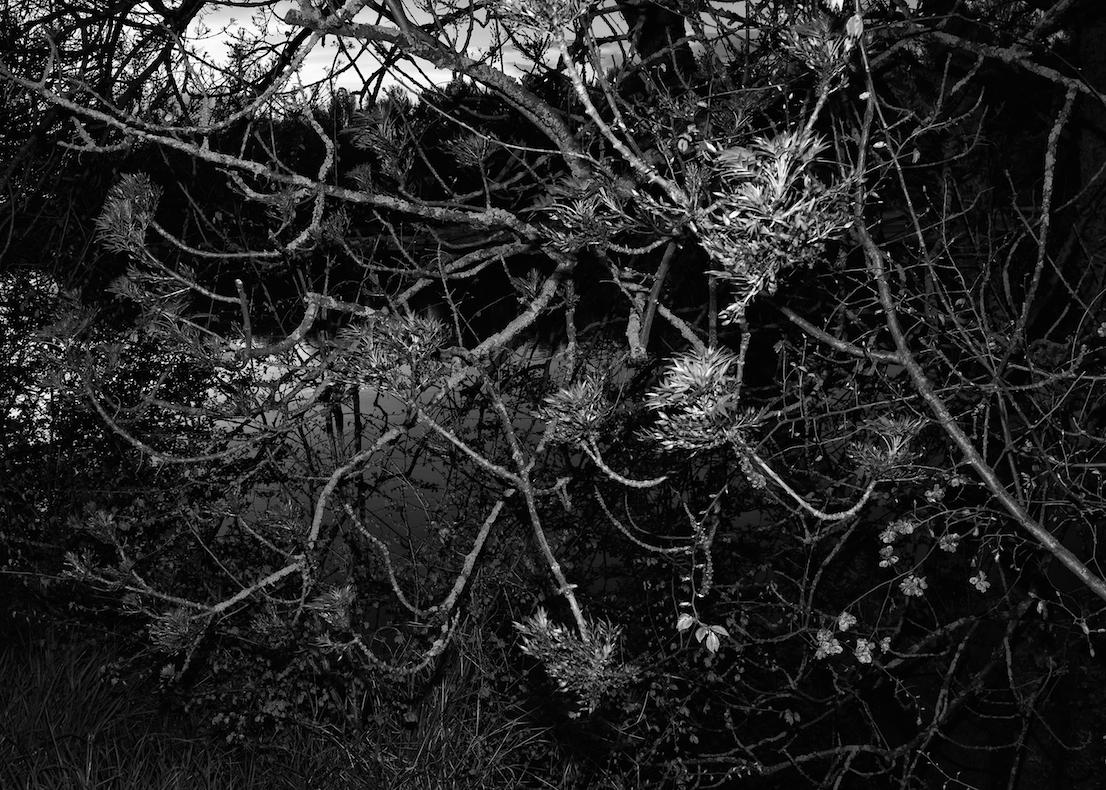 Loira, foto di Jacopo Benassi
