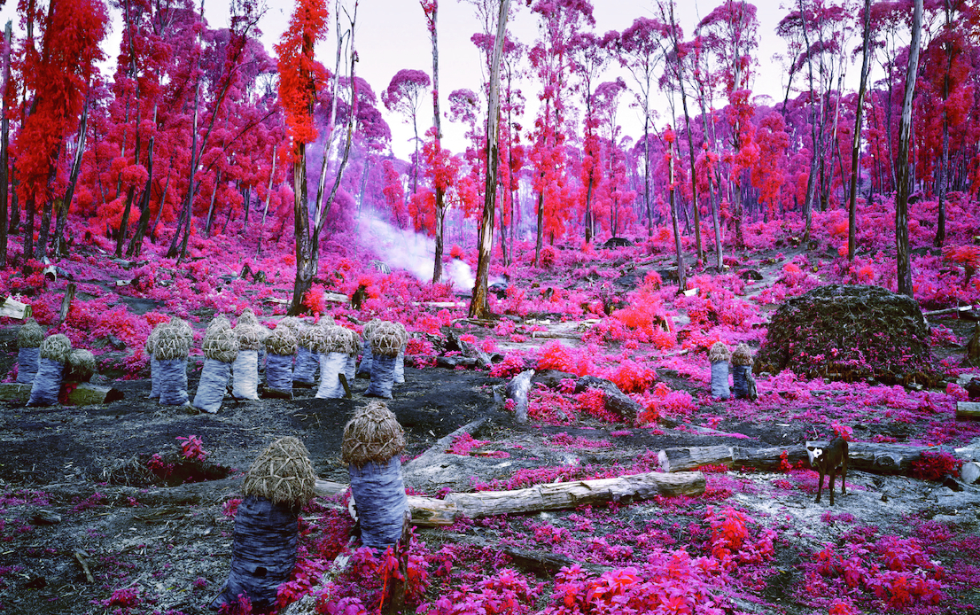 Richard Mosse, Hunches in Bunches, 2011. Courtesy Collezione privata. © Richard Mosse, Courtesy dellíartista e Jack Shainman Gallery, New York.
