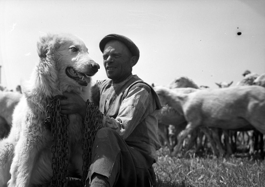 Federico Patellani. Puglia, 1947