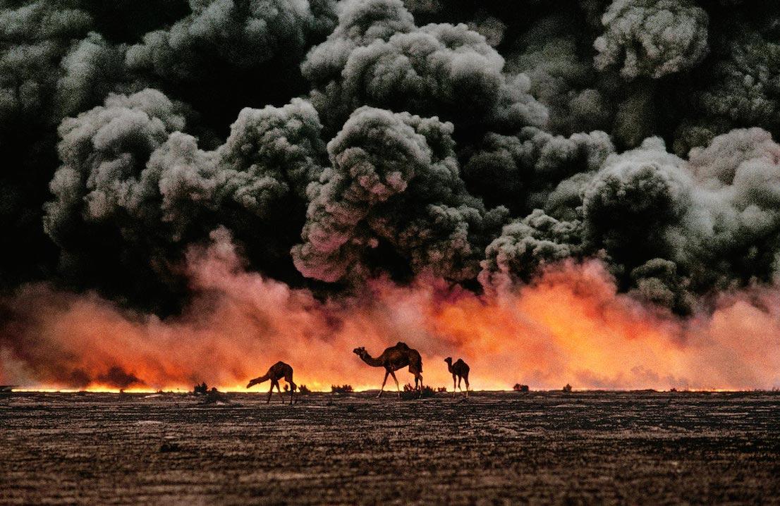 Cammelli e giacimenti di petrolio, Kuwait, 1991