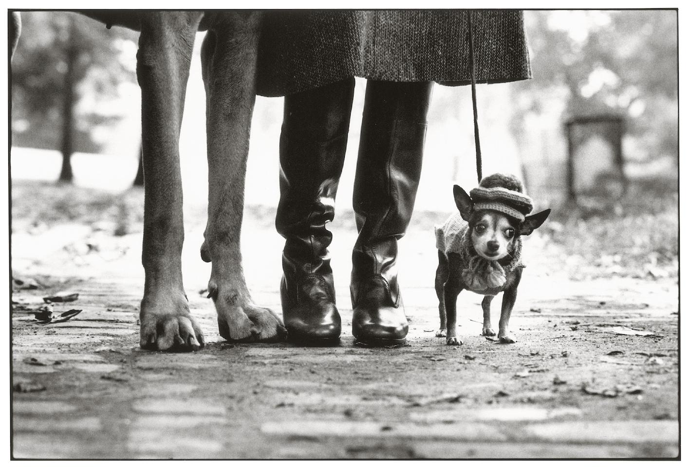 New York, 1974. Foto di Elliot Erwitt.