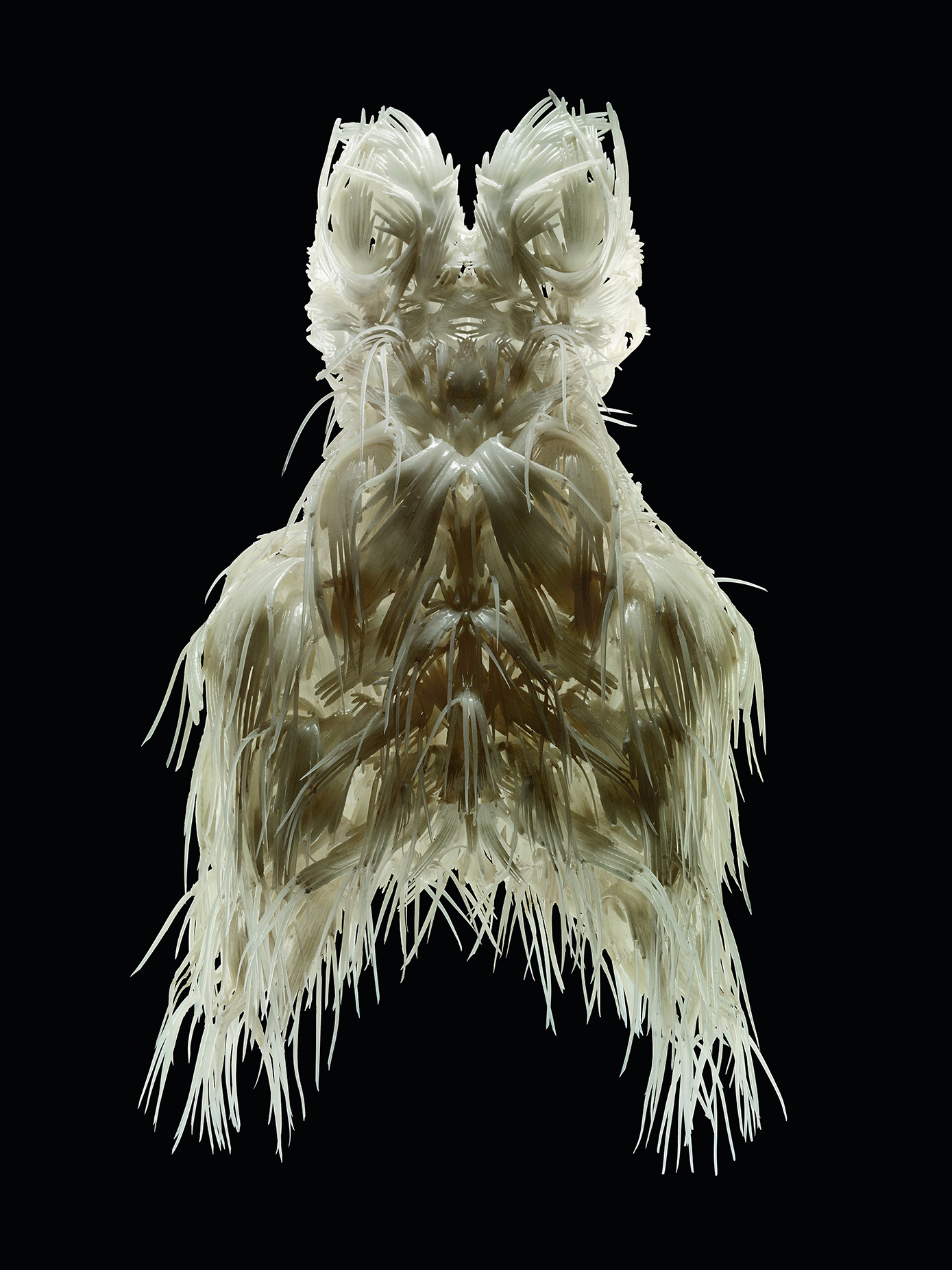 Iris van Herpen, Biopiracy, Dress, March 2014. Photo: Bart Oomes, No 6 Studios. © Iris van Herpen.