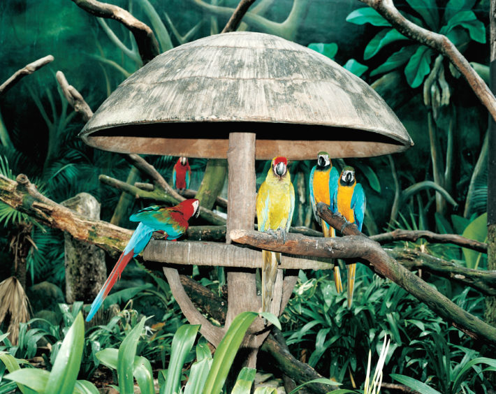 Jurong Bird Park, Singapore, 1999. © Armin Link.