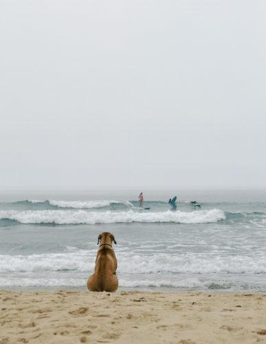 Beach Dog, Montauk, N.Y., 2002. © Michael Dweck.